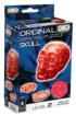 Skull (Red) Anatomy & Biology Jigsaw Puzzle