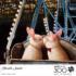 Ferris Wheel Kiss Animals Jigsaw Puzzle