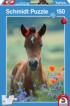 My Beloved Foal Horses Jigsaw Puzzle