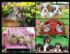 KODAK Premium Puzzles - Kittens & Puppies Cats Jigsaw Puzzle
