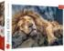 Sleeping Lion Lions Jigsaw Puzzle