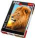 Lion Wildlife Jigsaw Puzzle
