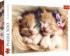 Sleeping Kittens Cats Jigsaw Puzzle
