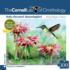 Ruby-Throated Hummingbird Birds Jigsaw Puzzle