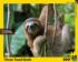 Three Toed Sloth Jungle Animals Jigsaw Puzzle