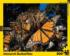 Monarch Butterflies Butterflies and Insects Jigsaw Puzzle
