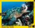 Green Sea Turtle Under The Sea Jigsaw Puzzle