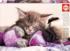 Dream Companions Cats Jigsaw Puzzle