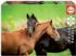 Horses Horses Jigsaw Puzzle