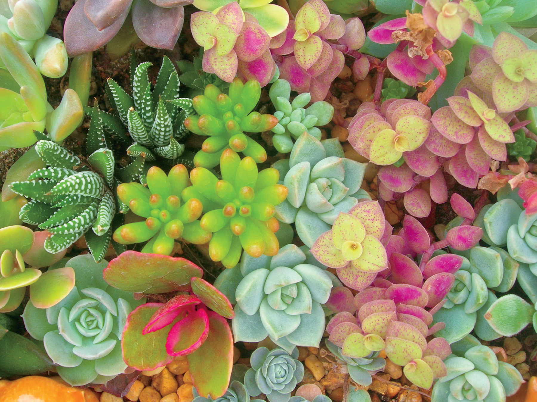 Bright Succulents Flowers Jigsaw Puzzle