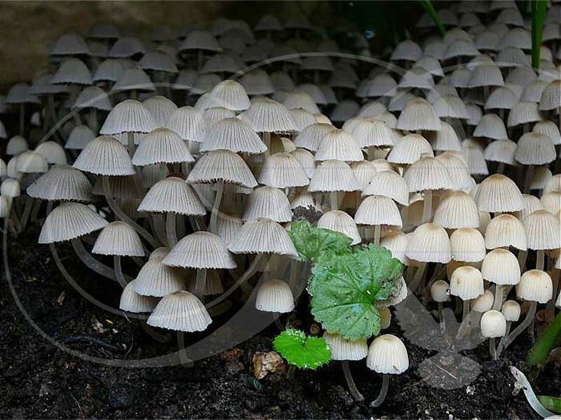 Fairies Bonnets Plants Wooden Jigsaw Puzzle