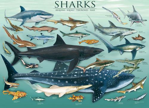Sharks Marine Life Jigsaw Puzzle