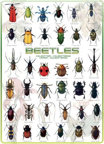 Beetles Butterflies and Insects Jigsaw Puzzle