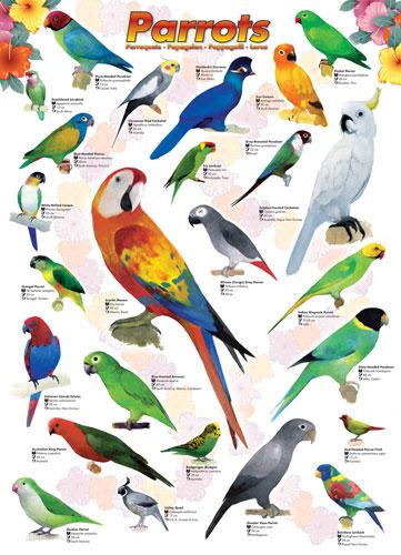 Parrots Birds Jigsaw Puzzle
