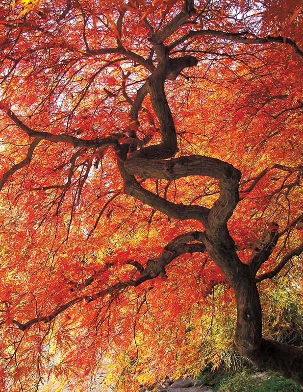 Colorful Canopy Fall Jigsaw Puzzle