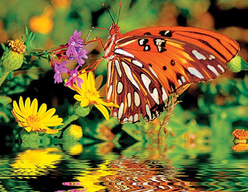 Magnificent Monarch Butterflies and Insects Jigsaw Puzzle