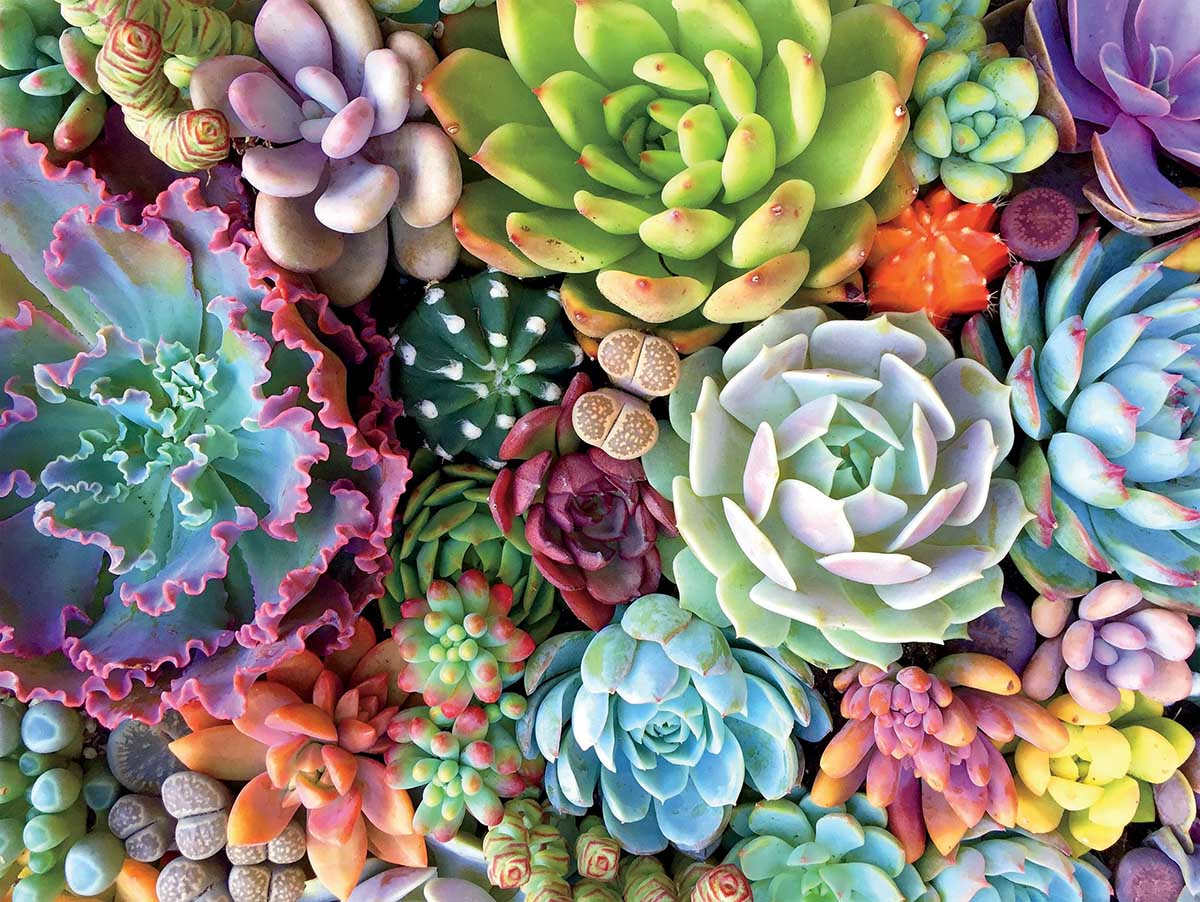 Succulent Synergy Flowers Jigsaw Puzzle