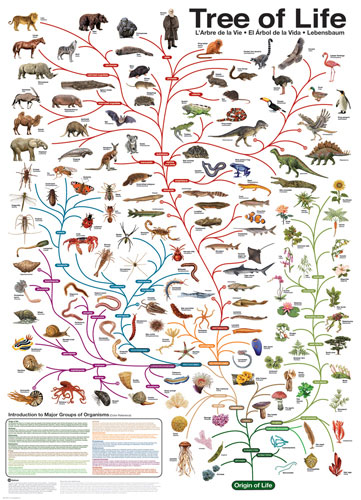 Evolution - The Tree of Life Animals Jigsaw Puzzle