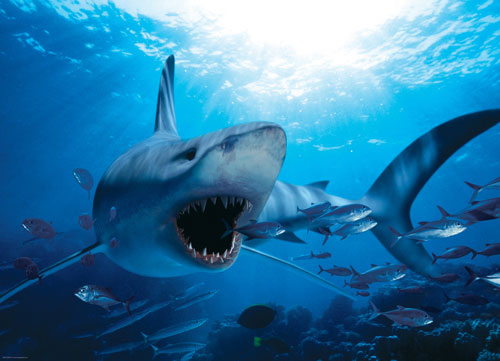 Hungry Shark Marine Life Jigsaw Puzzle