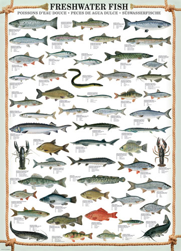 Freshwater Fish Educational Jigsaw Puzzle