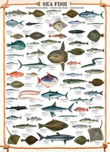 Sea Fish Under The Sea Jigsaw Puzzle