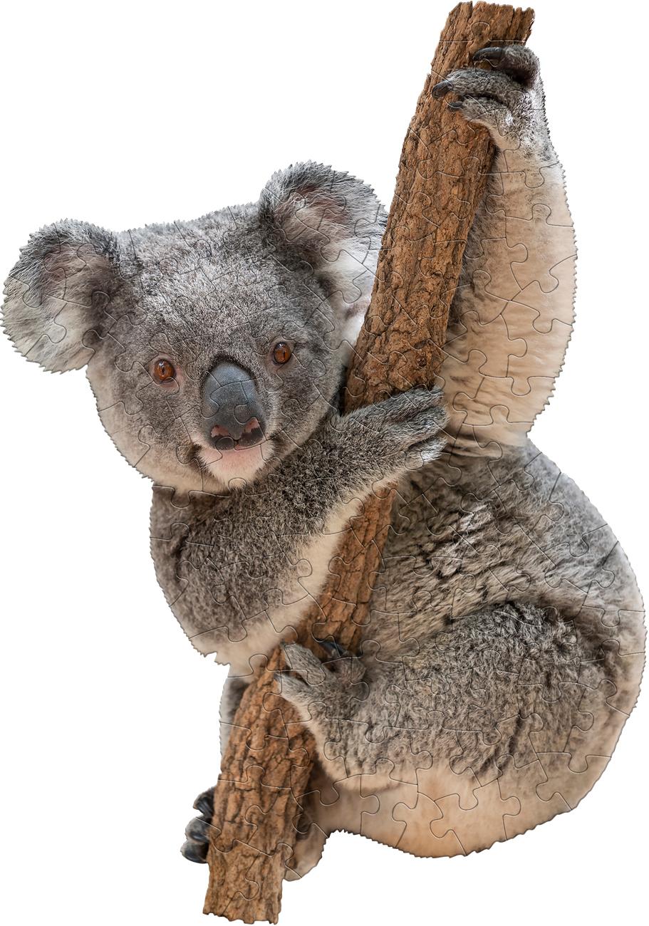 I Am Lil' Koala Animals Shaped Puzzle