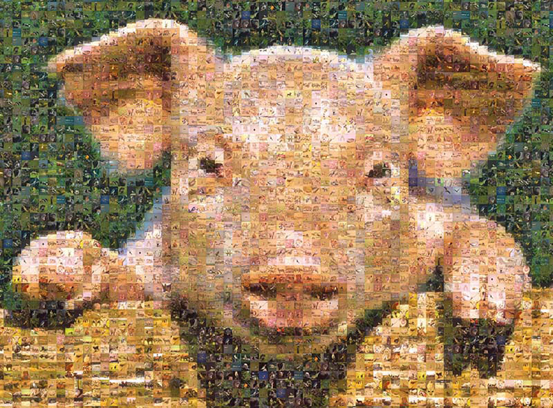 Pig, Photomosaic Farm Animals Jigsaw Puzzle