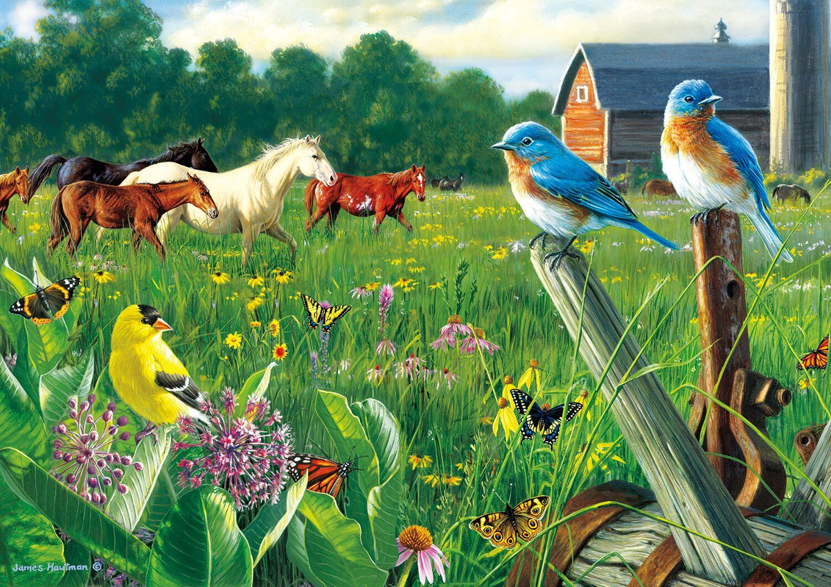 Country Meadow - Scratch and Dent Farm Jigsaw Puzzle