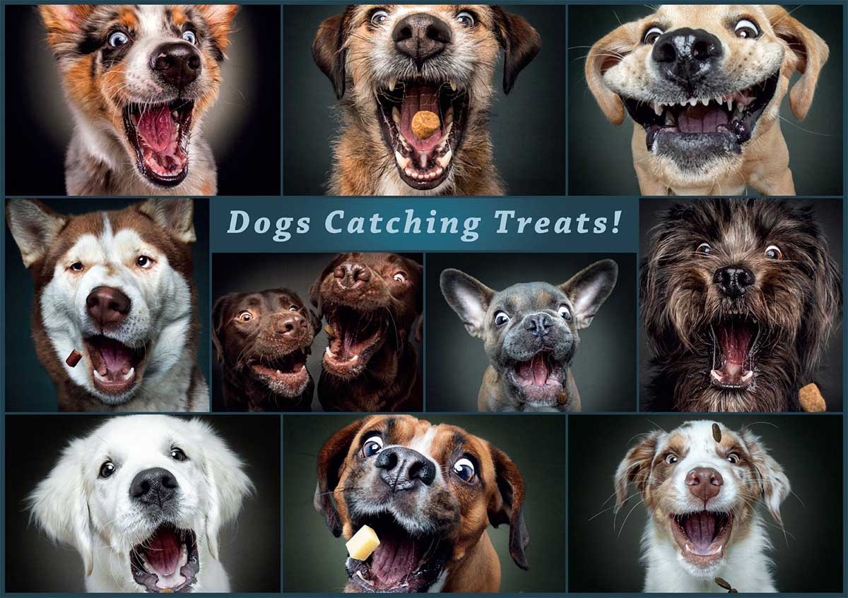 Catching the Perfect Treat Dogs Jigsaw Puzzle