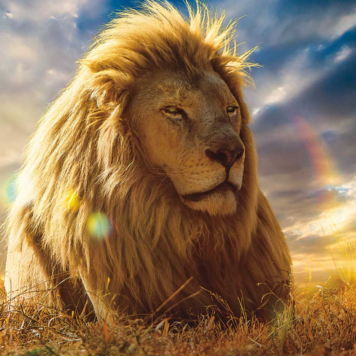Lion Pride Photography Jigsaw Puzzle