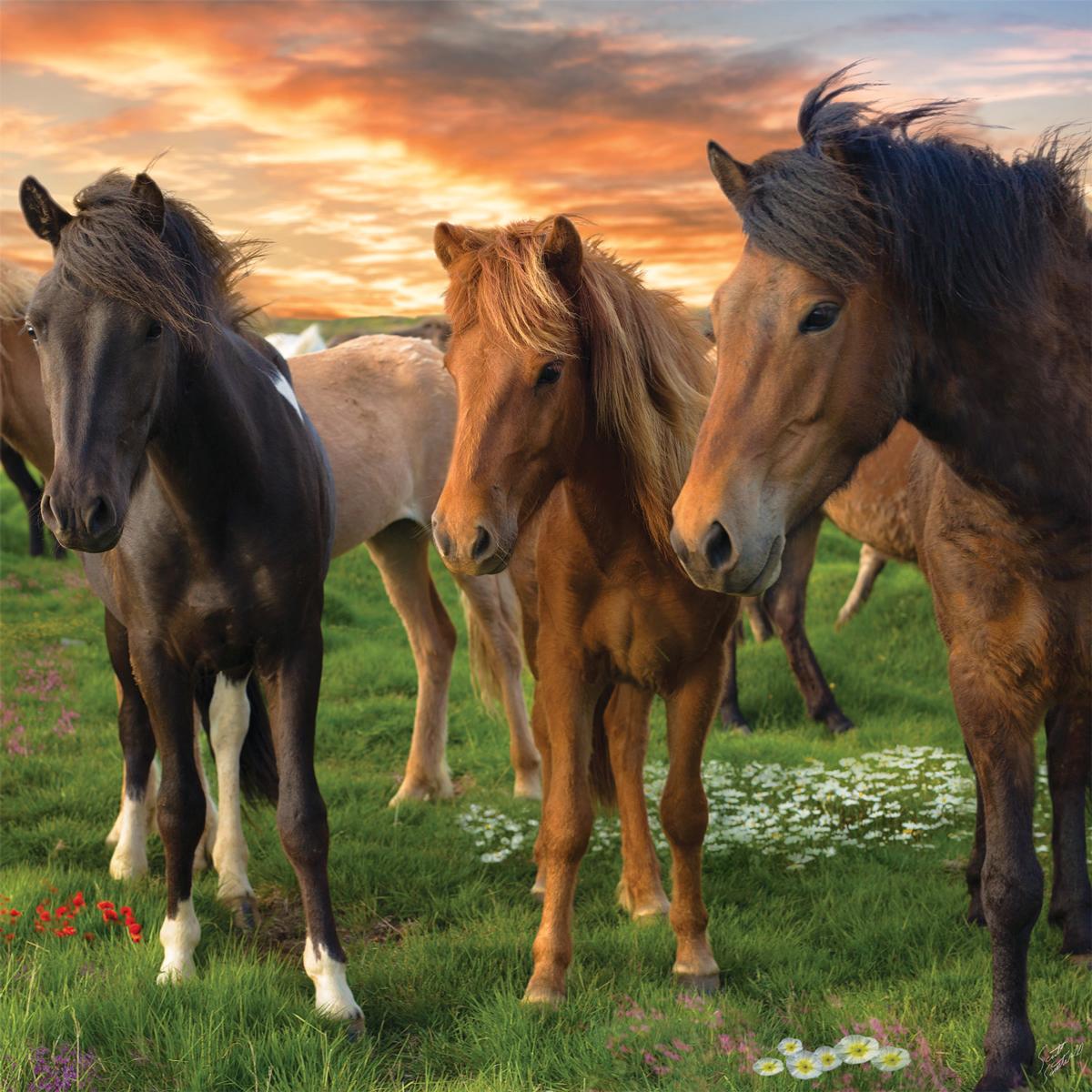 Icelandic Horses Horses Jigsaw Puzzle