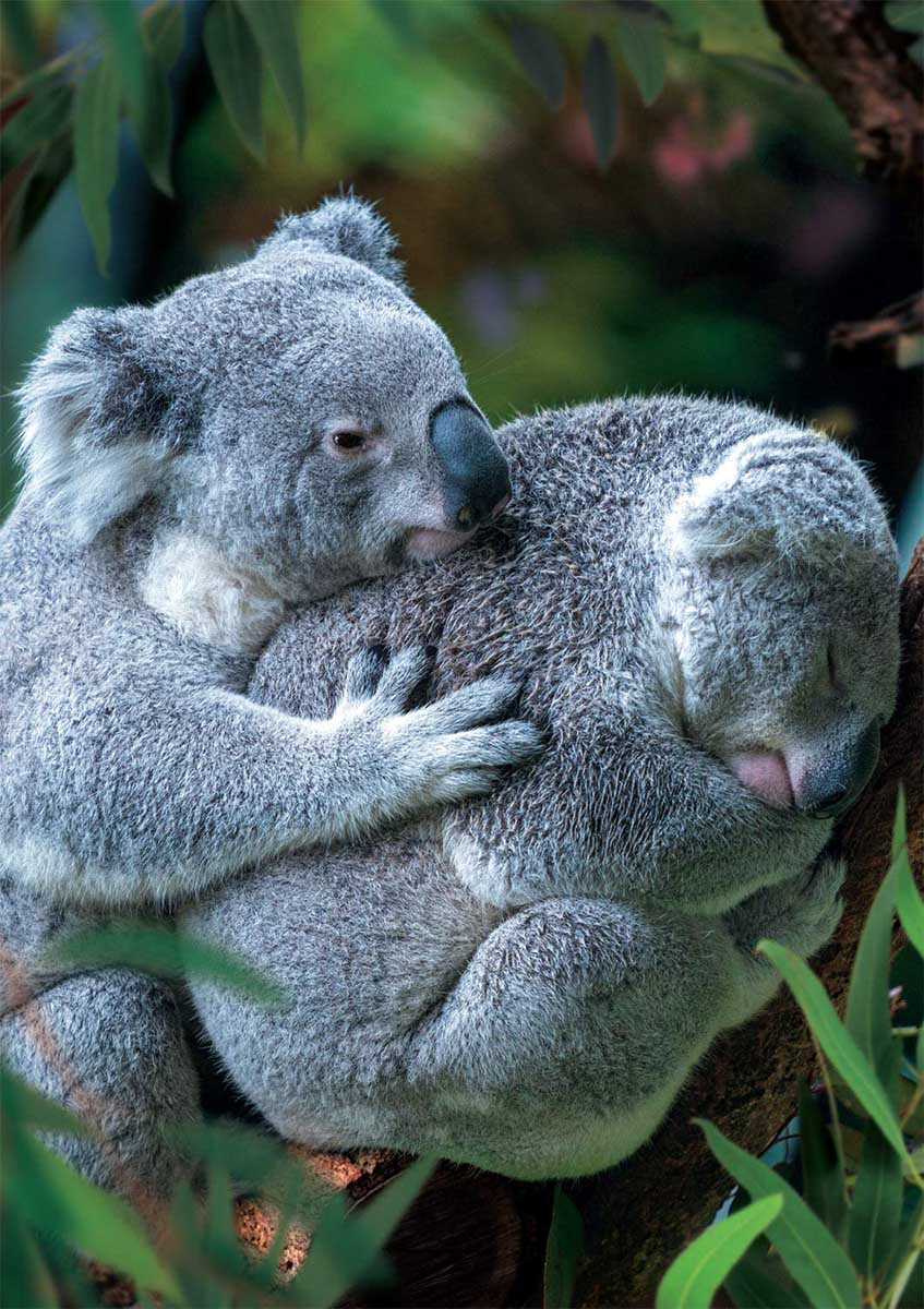 Bear Hug Animals Jigsaw Puzzle