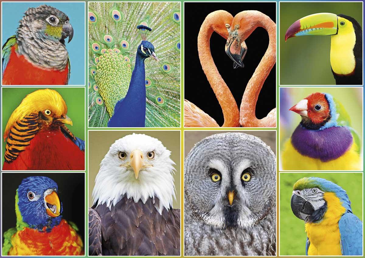Pretty Birds Birds Jigsaw Puzzle