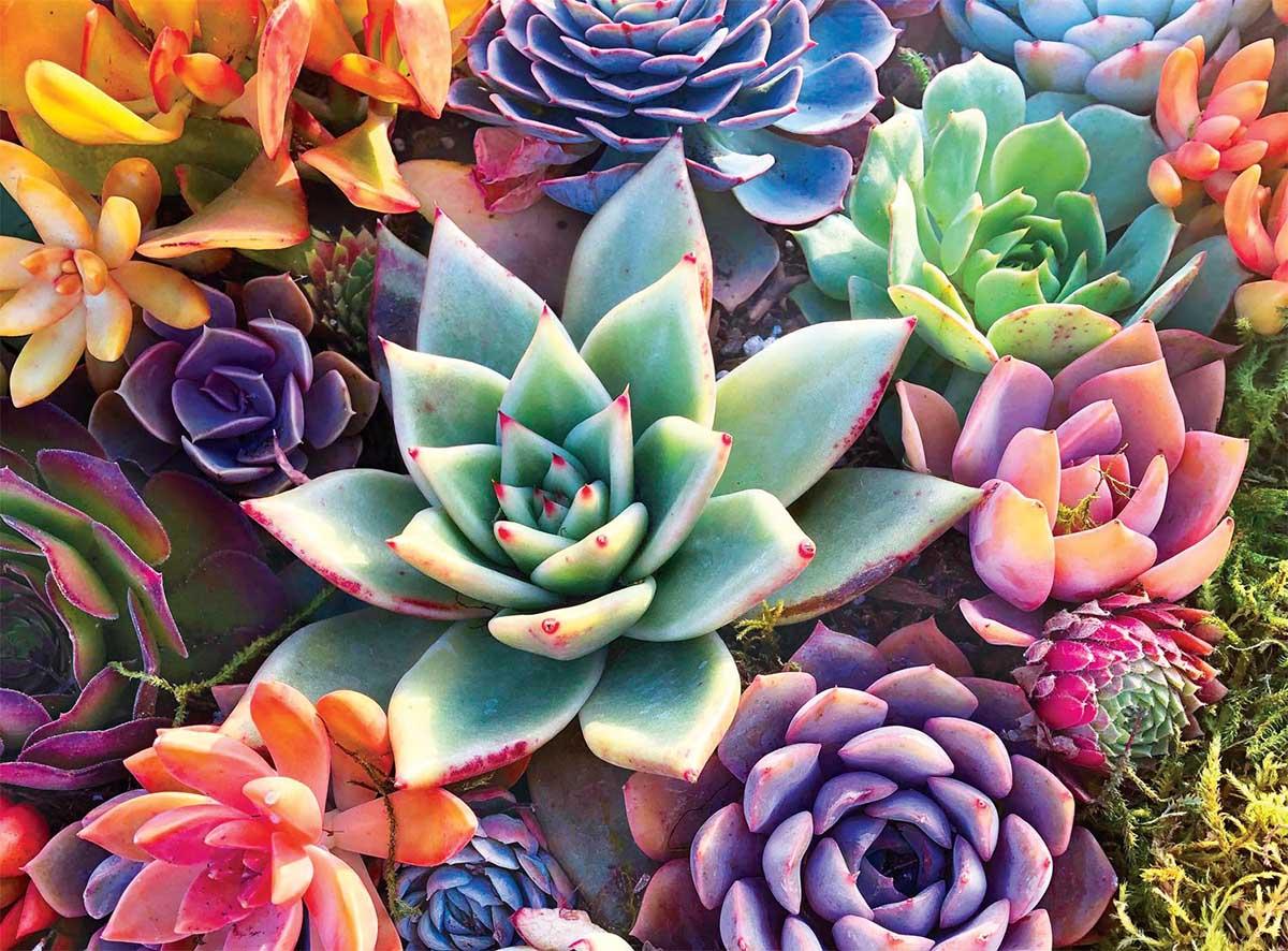 Simple Succulent Flowers Jigsaw Puzzle