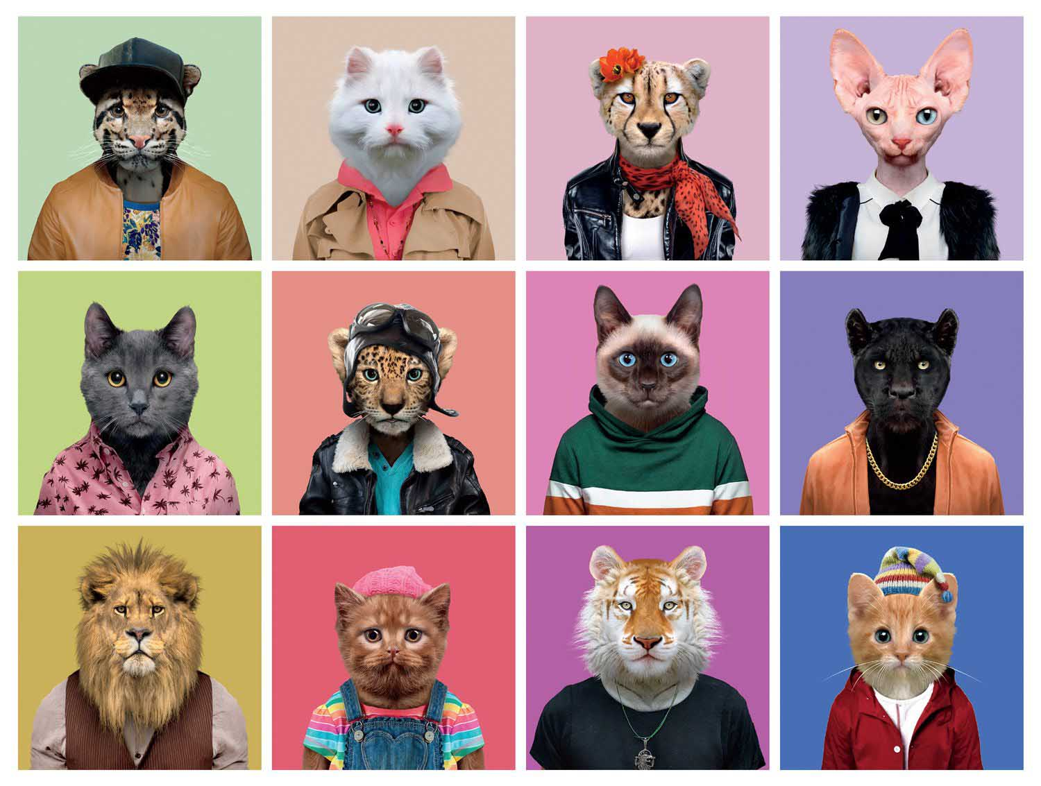 Cats in Clothes Cats Jigsaw Puzzle