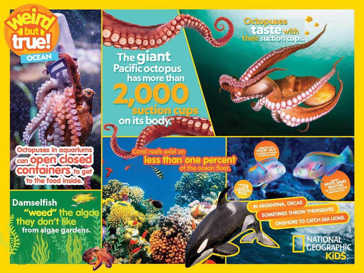 Weird But True Ocean Under The Sea Jigsaw Puzzle