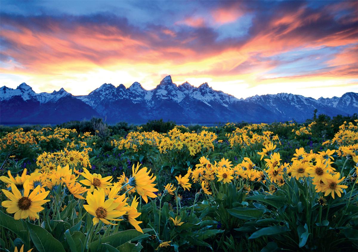 Grand Teton Meadows National Parks Jigsaw Puzzle