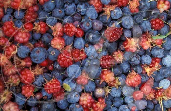 Alaska Wild Berries Alaska Wooden Jigsaw Puzzle