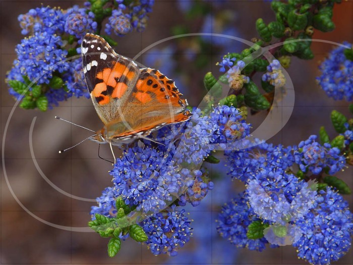 Butterfly Flowers Wooden Jigsaw Puzzle