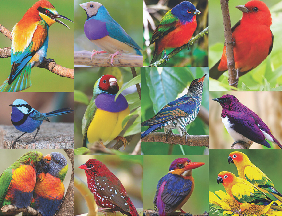 Birds Of Paradise Birds Jigsaw Puzzle