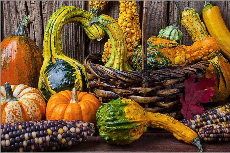 Harvest Colors Fall Jigsaw Puzzle