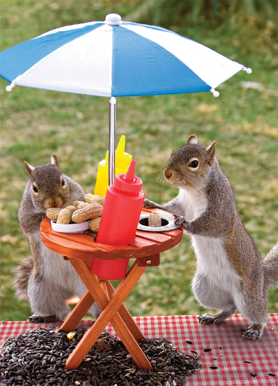Squirrel Feeder Lunchtime Jigsaw Puzzle Puzzlewarehouse Com