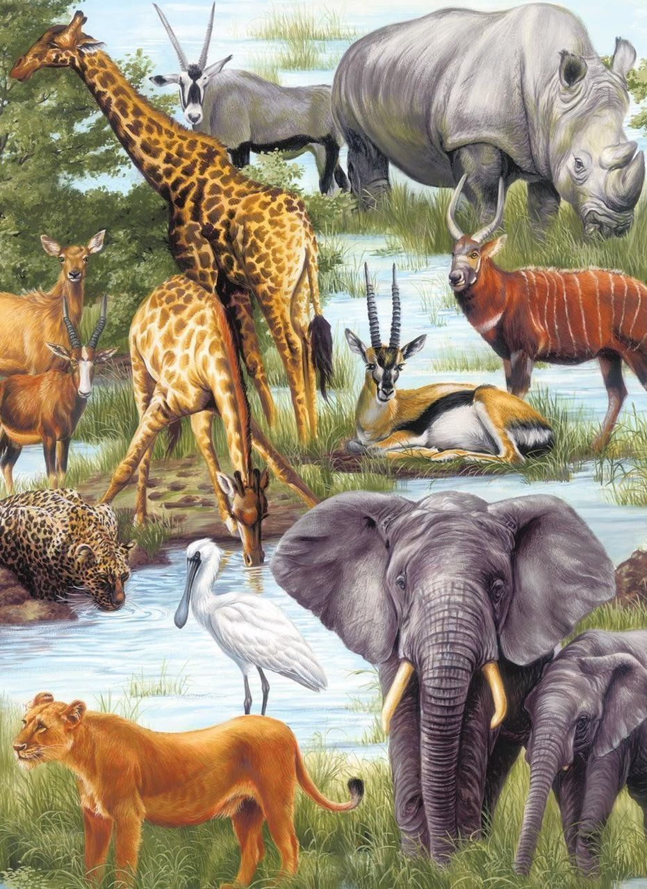 Animal Kingdom Animals Jigsaw Puzzle