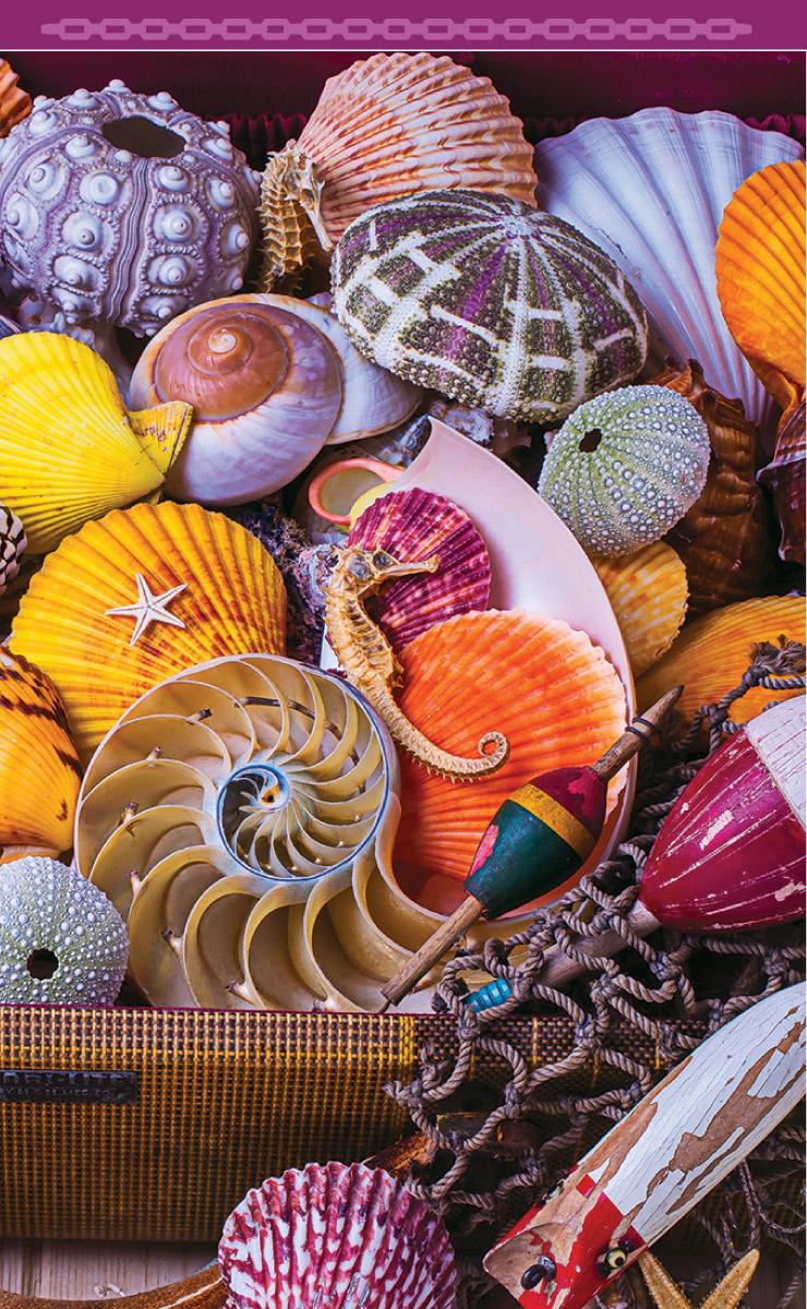 Seashells (Bridge Tally Sheets)