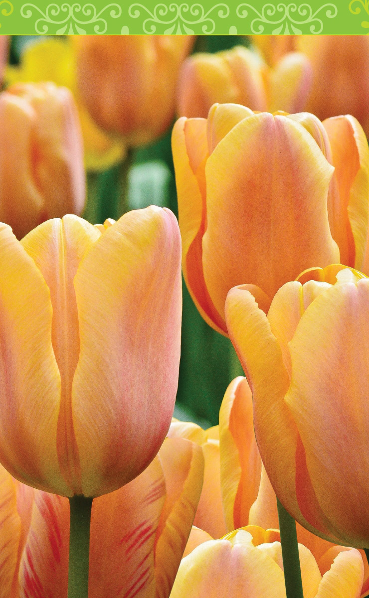 Spring Tulips (Bridge Tally Sheets)