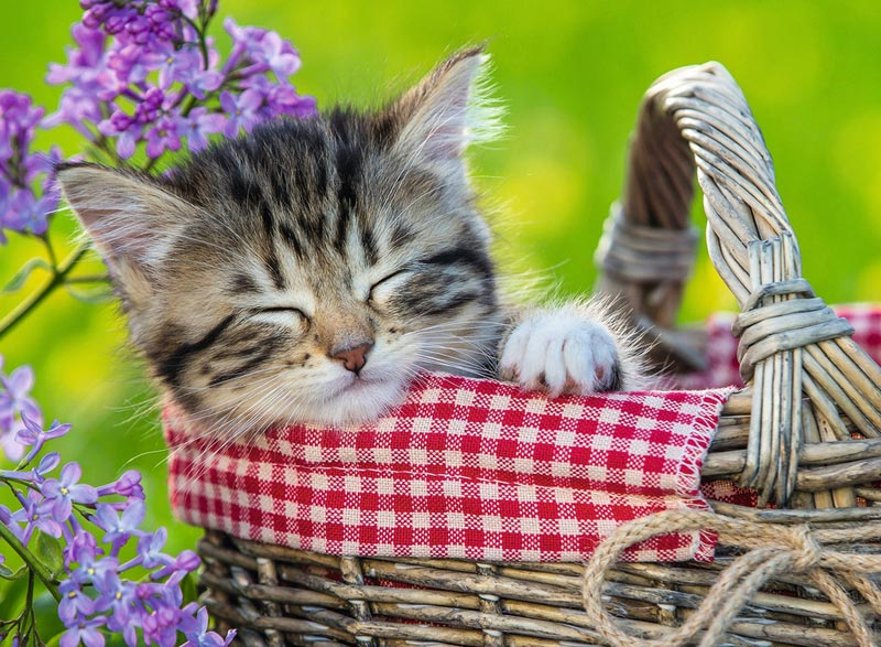 Sleeping Kitten Cats Jigsaw Puzzle