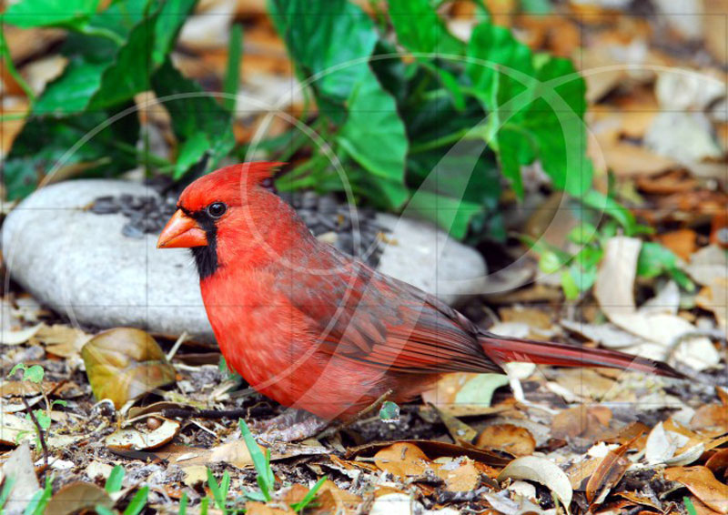 Male Cardinal Birds Wooden Jigsaw Puzzle