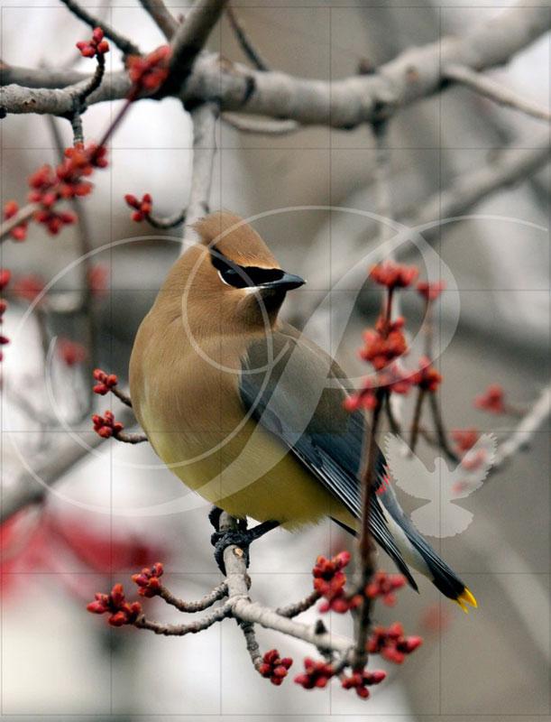 Cedar Waxwing Birds Wooden Jigsaw Puzzle