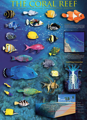 Coral Reef Australia Jigsaw Puzzle