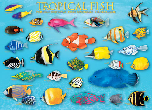 Tropical Fish Fish Jigsaw Puzzle